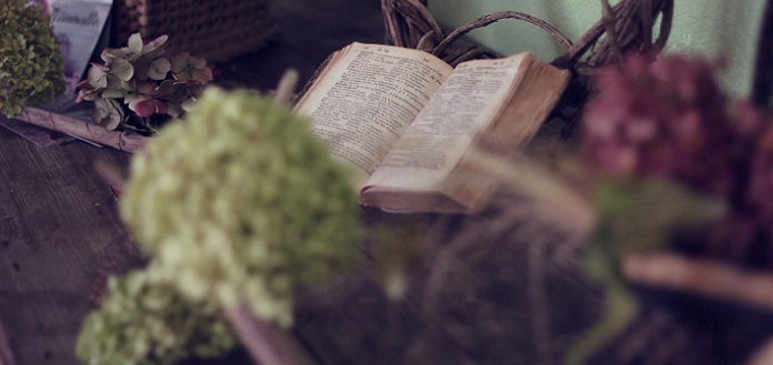 bible amidst plants and flowers