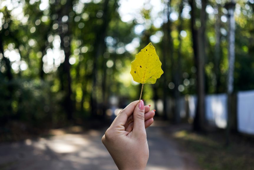 image of a trail out of focus with a hand with pink nail polish on the fingernails holding up a leaf